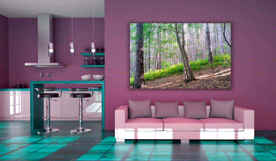 green forest photography
