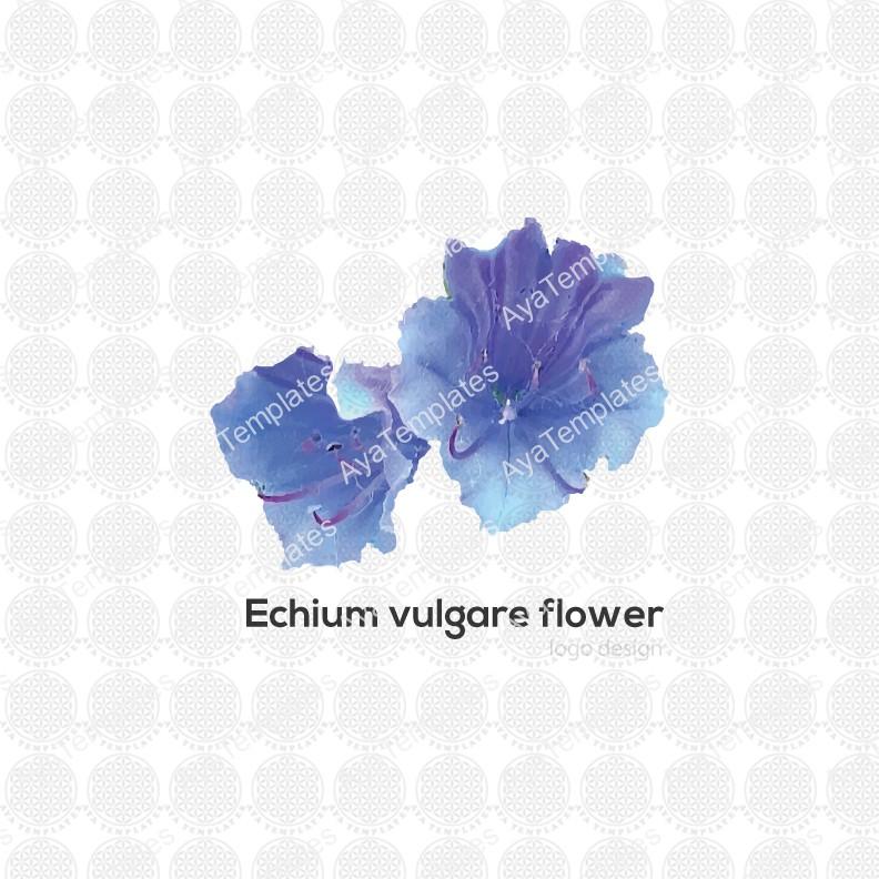 Echium-vulgare-logo