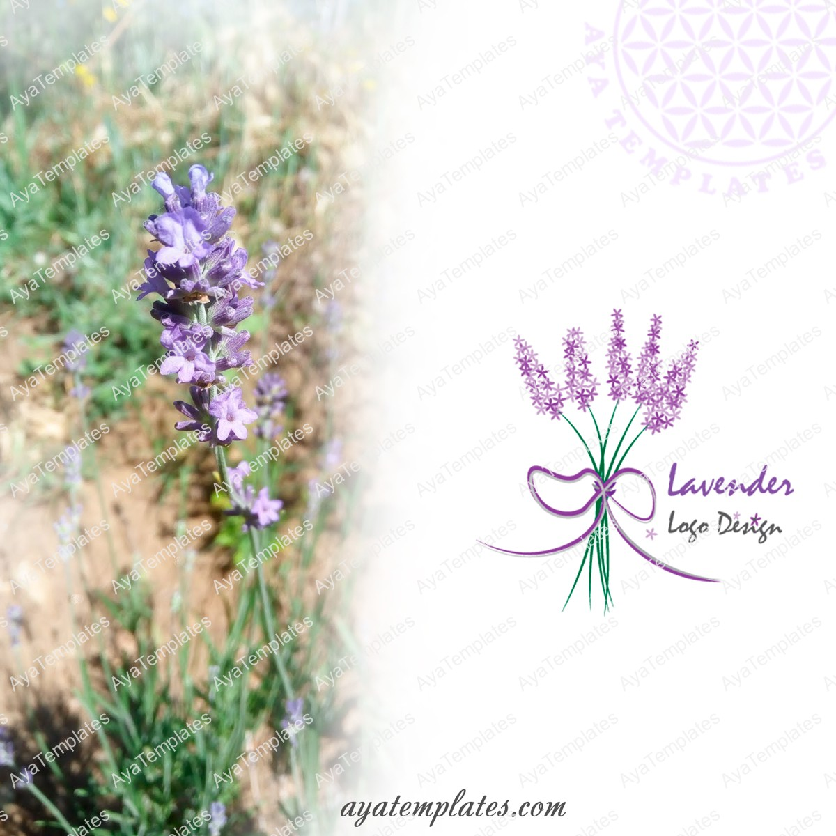 lavender-logo-design-and-brand-identity-collage-aya-templates