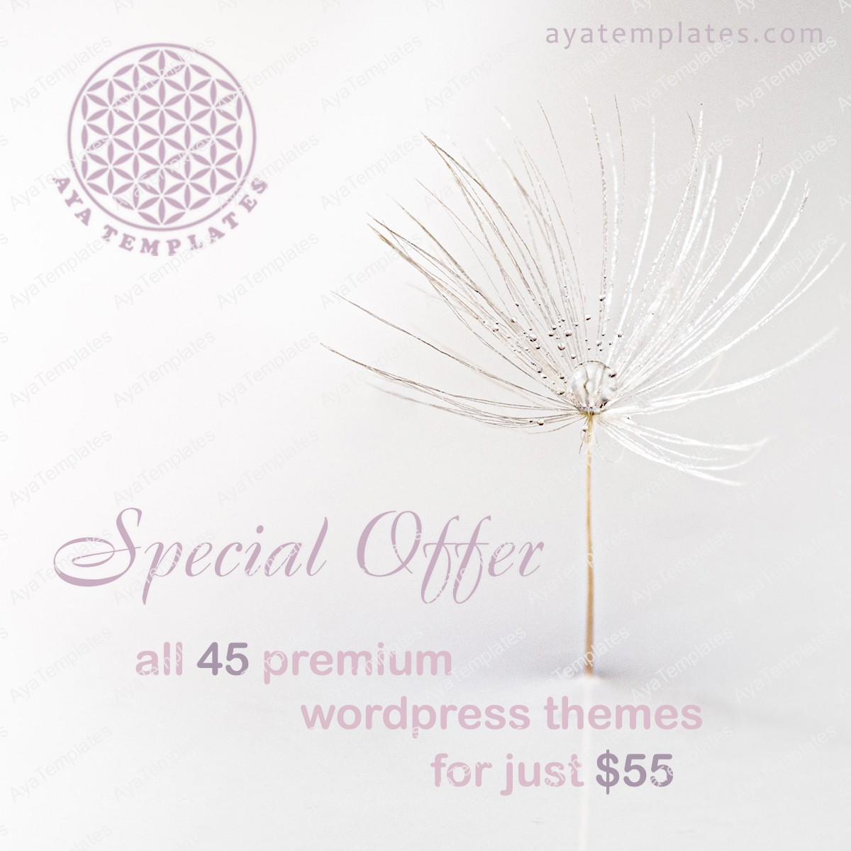 special-offer-premium-themes
